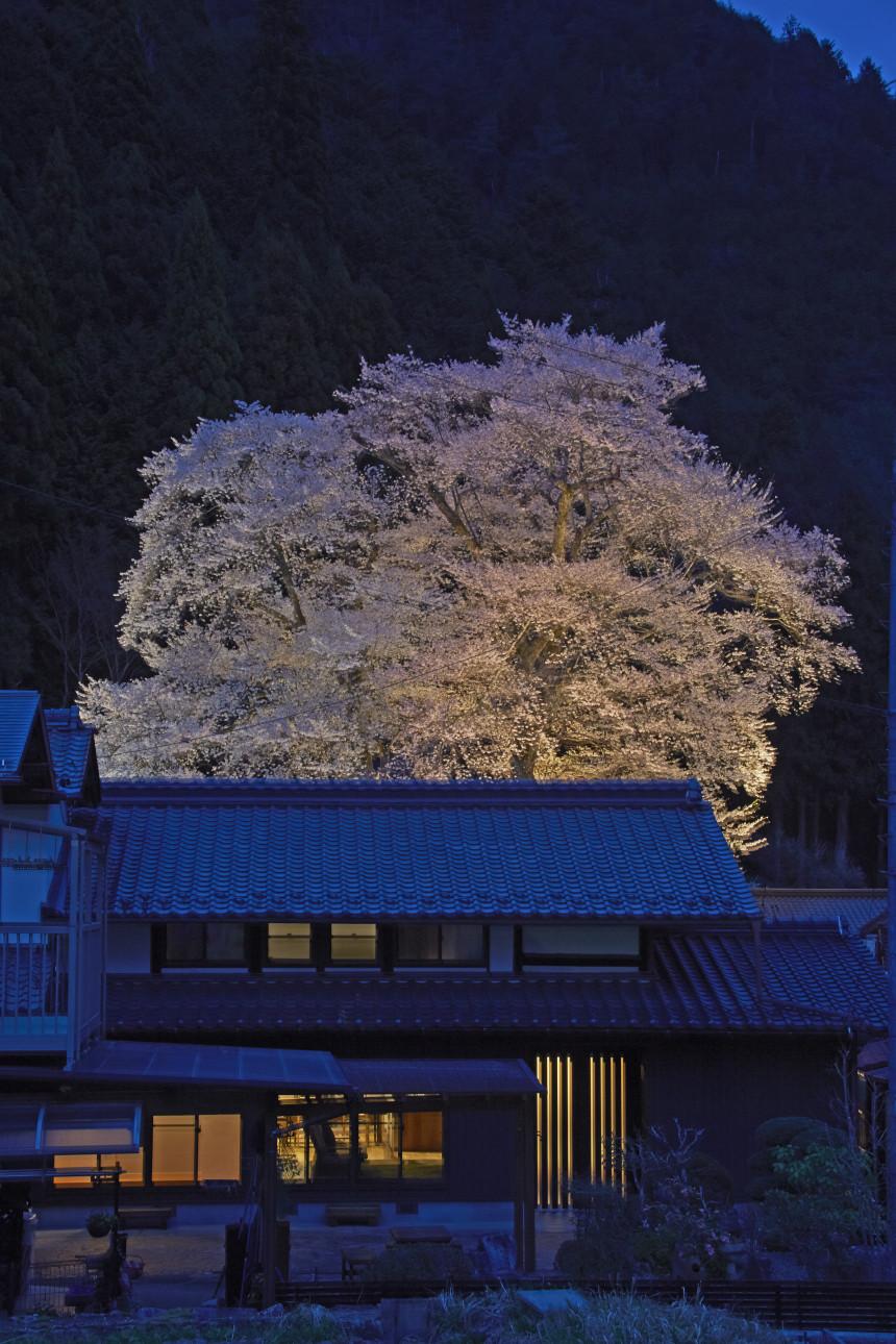 桜が見守る いつまでも家族仲良く暮らす
