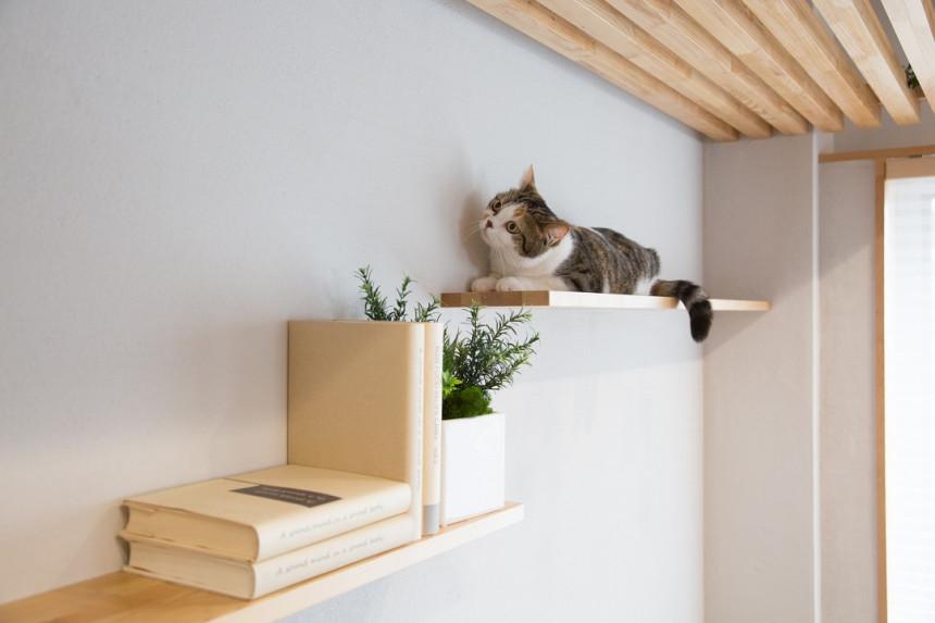 獣医師監修。猫と人が快適に心地よく、健康的に過ごすための家